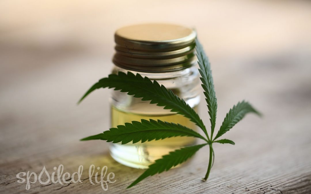 Fast and Furious – Rise of CBD Cannabinoids